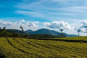 Holiday Destinations in Kerala - Raviz Hotels & Resorts